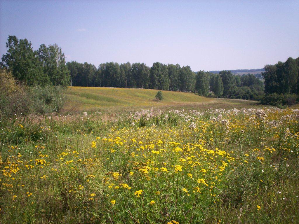 природа нижегородская фото